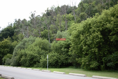 forest-beside-road.jpg
