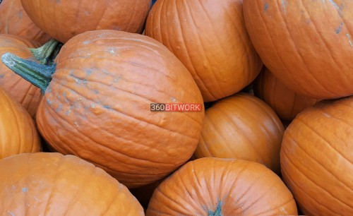 big-pumpkins-2.jpg