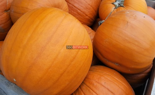 big-pumpkins.jpg