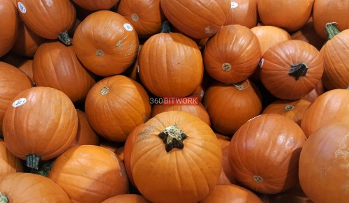 small-pumpkins.jpg