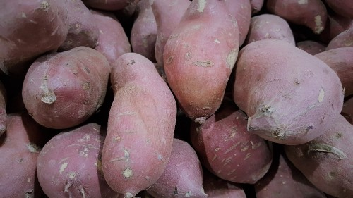 Japanese-sweet-potato.jpg